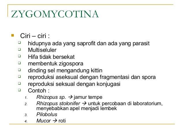 Biologi kelas 10 - Jamur (Fungi)