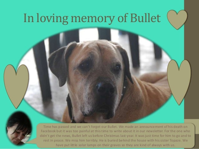In loving memory of Bullet     Time has passed and we can't forget our Bullet. We made an announcement of his death on   F...