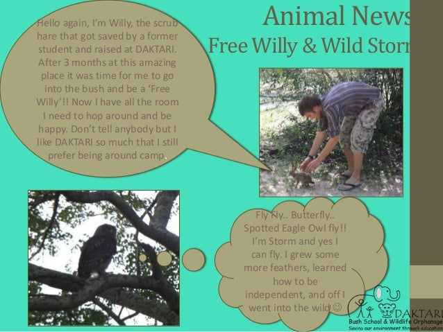 Hello again, I'm Willy, the scrub          Animal News:hare that got saved by a formerstudent and raised at DAKTARI.      ...