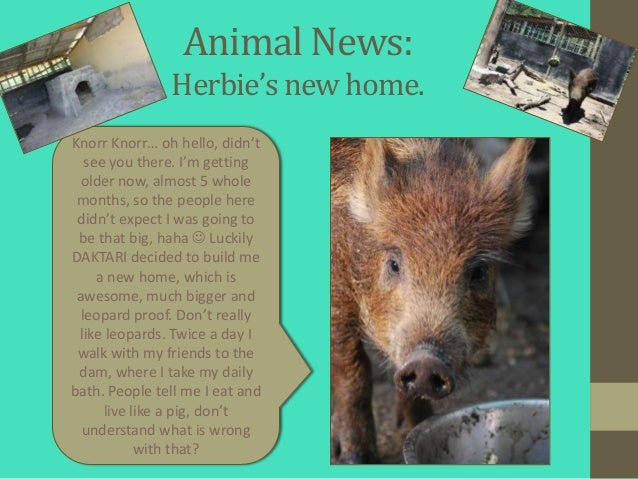 Animal News:               Herbie's new home.Knorr Knorr… oh hello, didn't   see you there. I'm getting older now, almost ...