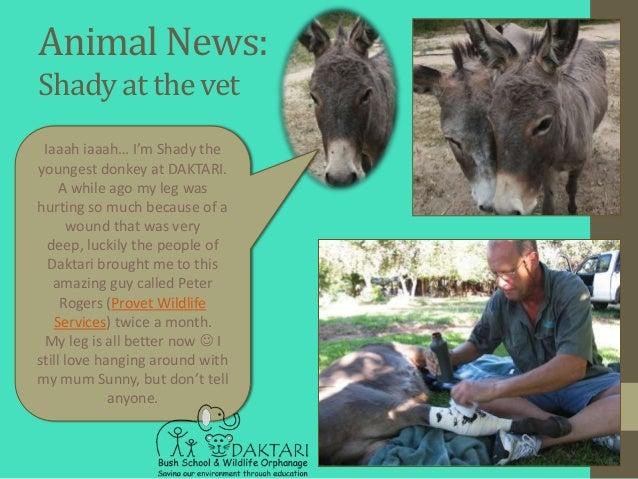 Animal News:Shady at the vet Iaaah iaaah… I'm Shady theyoungest donkey at DAKTARI.    A while ago my leg washurting so muc...