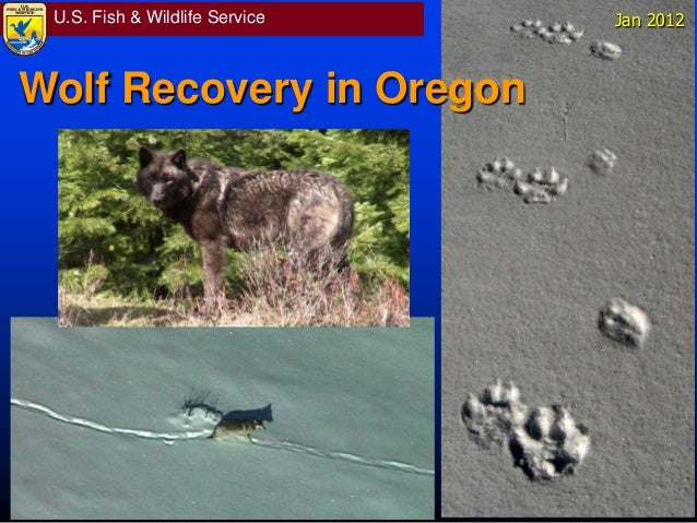 U.S. Fish & Wildlife Service Jan 2012 Wolf Recovery in Oregon