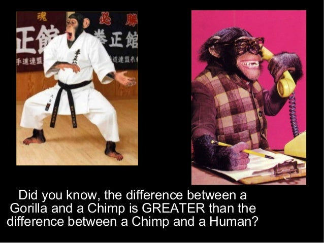 Did you know, the difference between a Gorilla and a Chimp is GREATER than the difference between a Chimp and a Human?