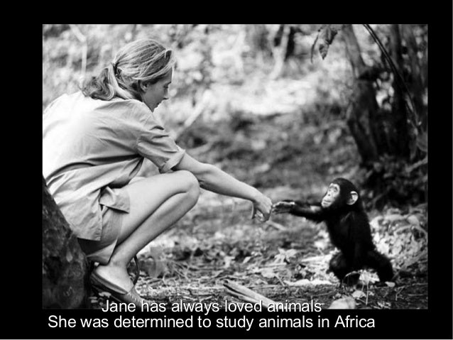 Jane has always loved animalsJane has always loved animals She was determined to study animals in AfricaShe was determined...