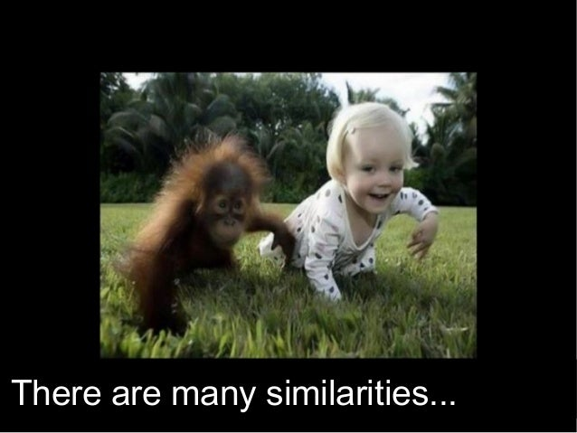 There are many similarities...