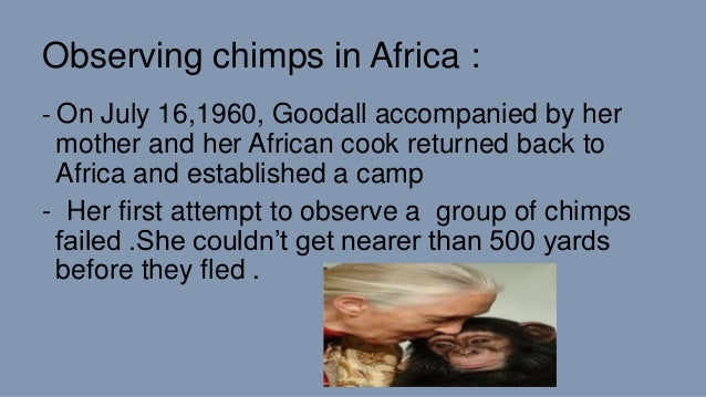 Observing chimps in Africa : - On July 16,1960, Goodall accompanied by her mother and her African cook returned back to Af...