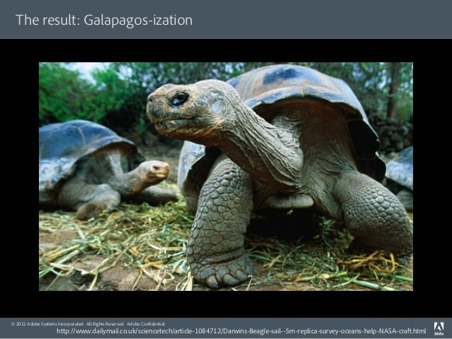 The result: Galapagos-ization© 2012 Adobe Systems Incorporated. All Rights Reserved. Adobe Confidential.                   ...