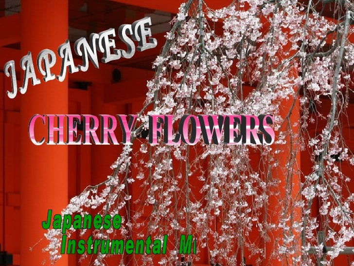 JAPANESE CHERRY  FLOWERS Japanese  Instrumental  Music
