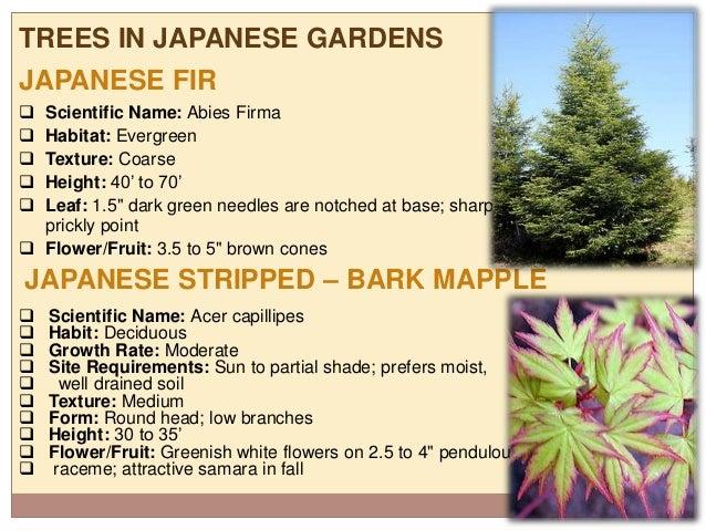 ... Garden Creating Japanese Gardens : Japanese Gardens Study ... Part 91
