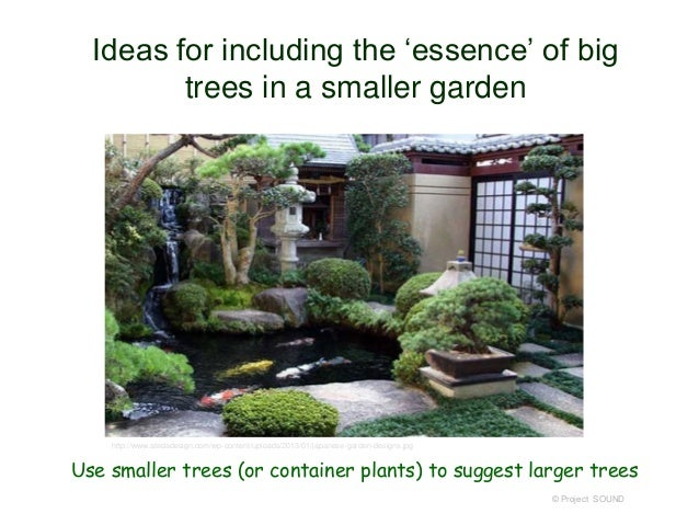 in a japanese garden using calif native gymnosperms 2013 71 638