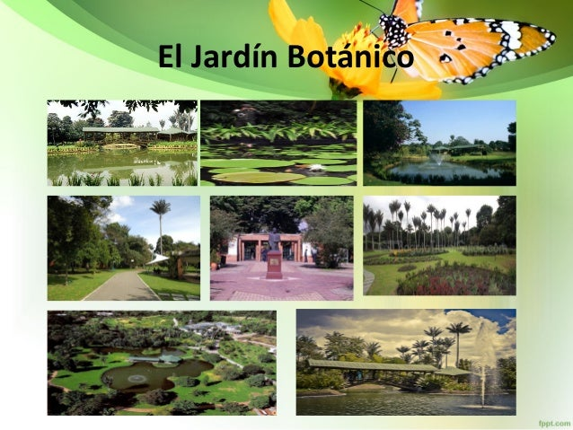 Jardin botanico for Jardin botanico cursos