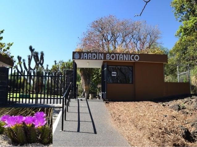 Jardin botanico unam for Botanic com jardin