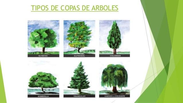 Asistente en jardiner a for Arboles con sus nombres y caracteristicas