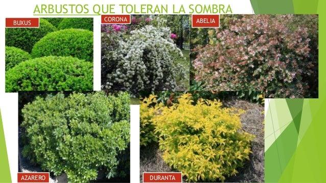 Asistente en jardiner a - Nombres de arbustos ...