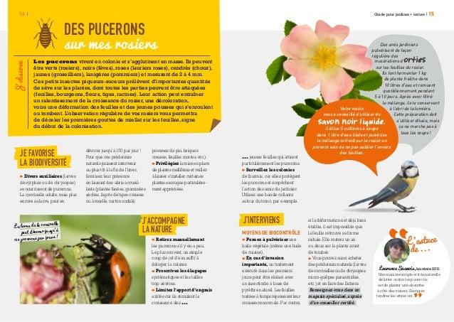 Jardiner nature def web - Puceron rosier savon noir ...