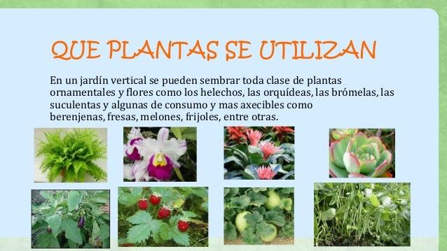 que plantas