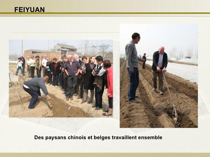 Des paysans chinois et belges travaillent ensemble   FEIYUAN