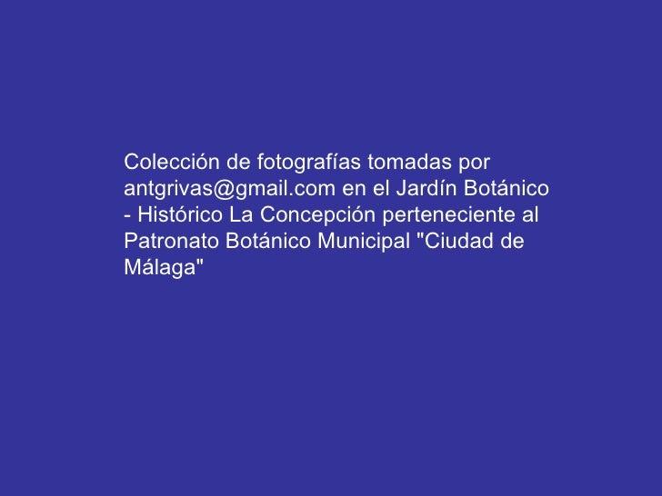 Colección de fotografías tomadas por antgrivas@gmail.com en el Jardín Botánico - Histórico La Concepción perteneciente al ...
