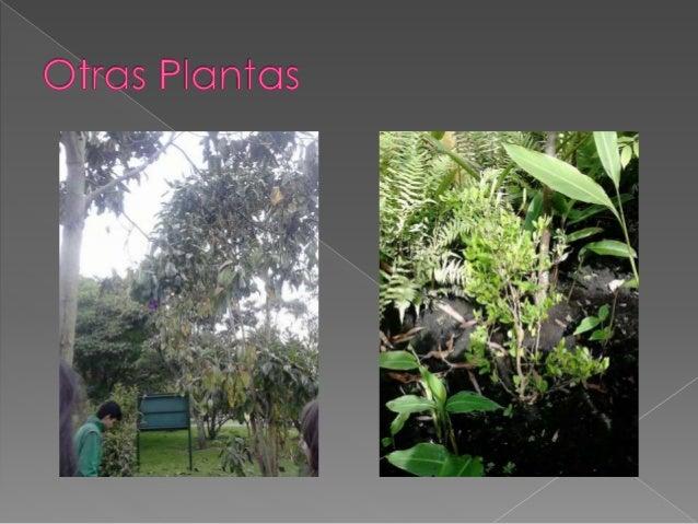 Flora del Jardin Botanico José Celestino Mutis