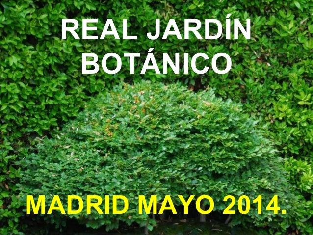Jard n bot nico madrid for Jardin botanico madrid horario