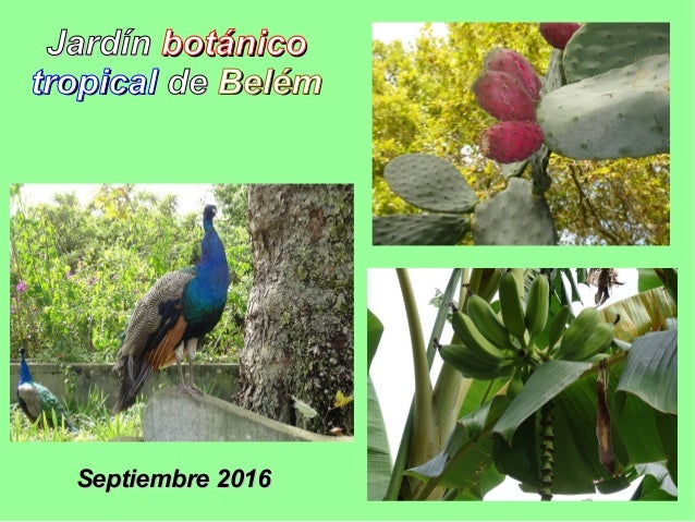 JardínJardín botánicobotánico tropicaltropical dede BelémBelém Septiembre 2016Septiembre 2016