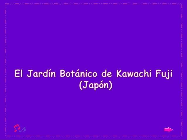 Este lugar, es conocido como el jardín Kawachi   Fuji y se encuentra localizado en la ciudad    Japonesa de Kitakyushu. Su...