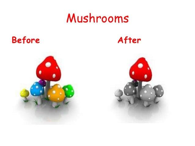 MushroomsBefore          After
