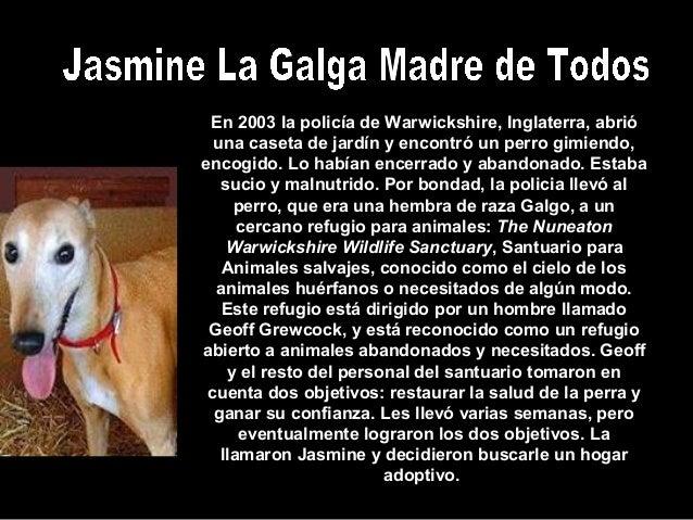 En 2003 la policía de Warwickshire, Inglaterra, abrióuna caseta de jardín y encontró un perro gimiendo,encogido. Lo habían...