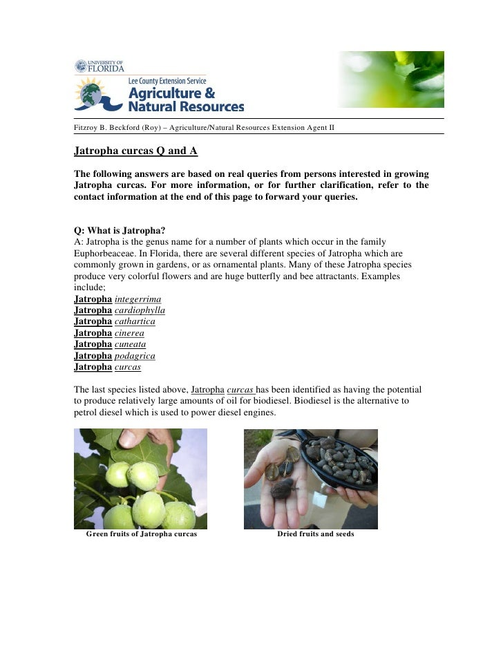 Fitzroy B. Beckford (Roy) – Agriculture/Natural Resources Extension Agent IIJatropha curcas Q and AThe following answers a...