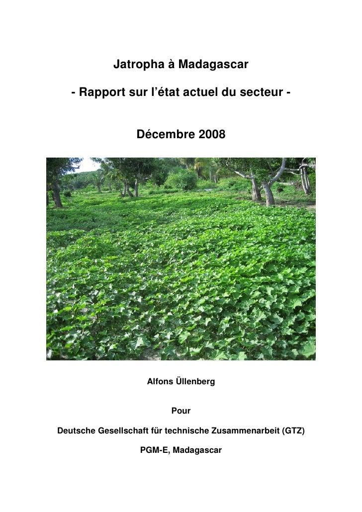 Jatropha à Madagascar     - Rapport sur l'état actuel du secteur -                     Décembre 2008                      ...