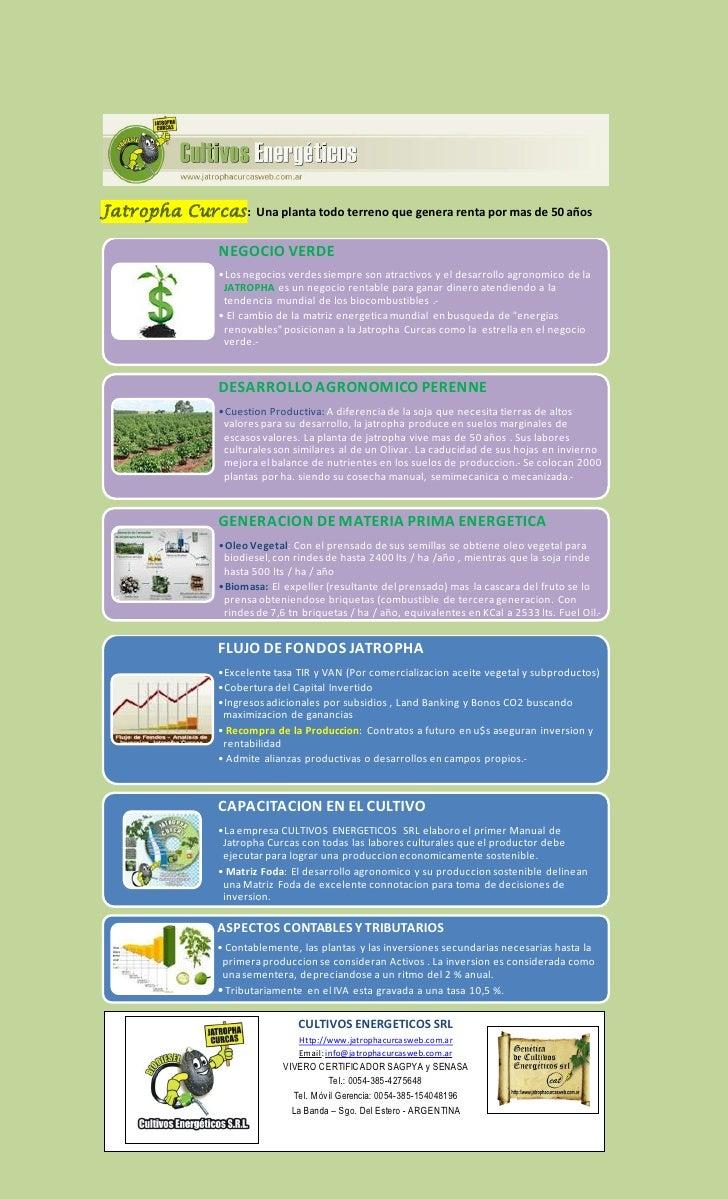 Jatropha Curcas :    Una planta todo terreno que genera renta por mas de 50 años             NEGOCIO VERDE             •Lo...