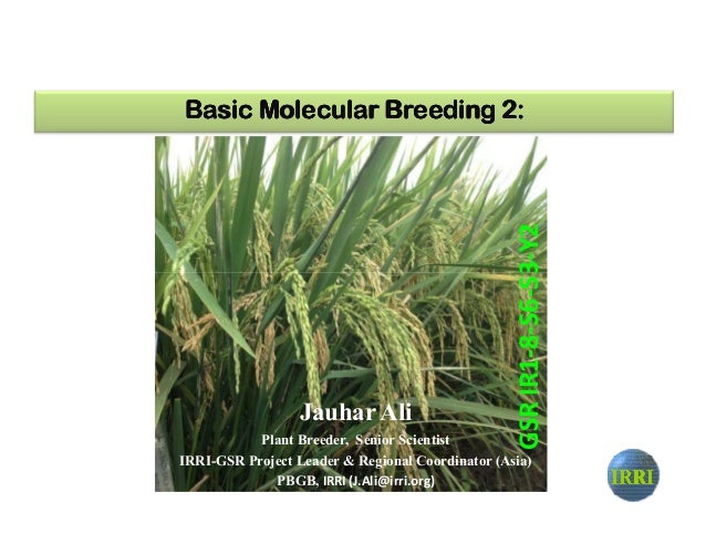 Basic Molecular Breeding 2:Basic Molecular Breeding 2:Basic Molecular Breeding 2:Basic Molecular Breeding 2: S3-Y2 IRRIIRR...