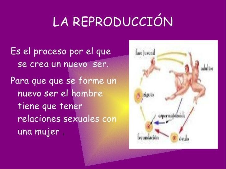 LA REPRODUCCIÓN <ul><li>Es el proceso por el que se crea un nuevo  ser.