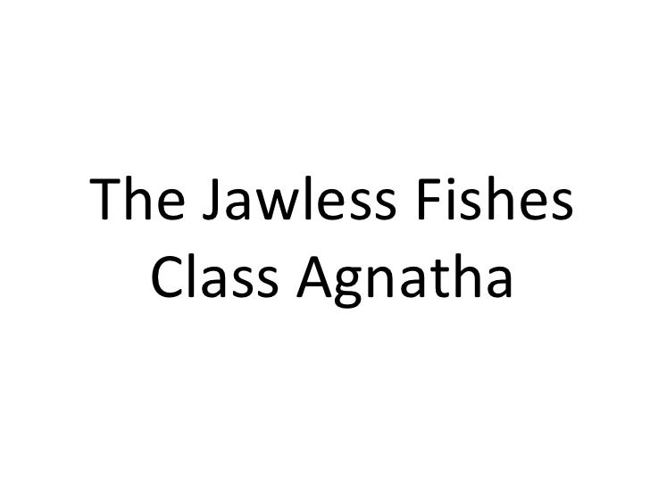 The Jawless Fishes  Class Agnatha