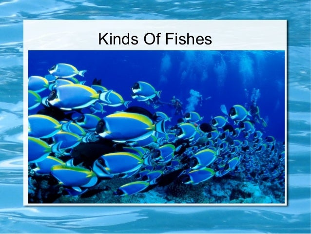 Kinds Of Fishes