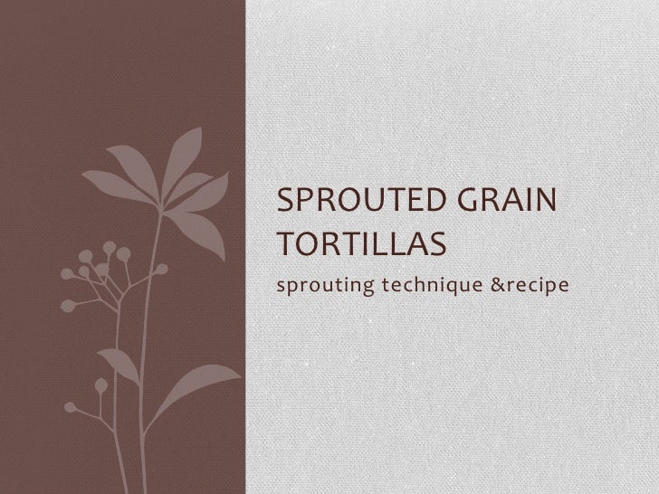 sprouting technique & recipe<br />sprouted grain tortillas<br />