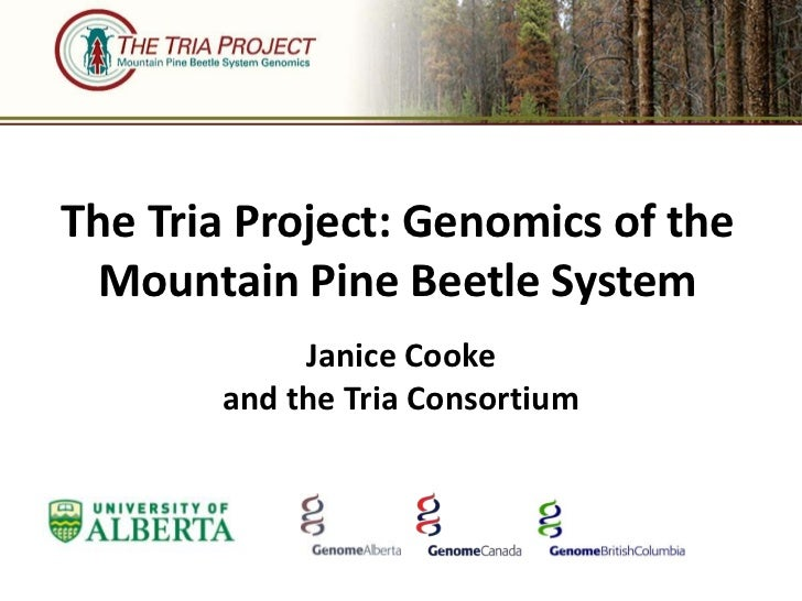 The Tria Project: Genomics of the  Mountain Pine Beetle System            Janice Cooke       and the Tria Consortium