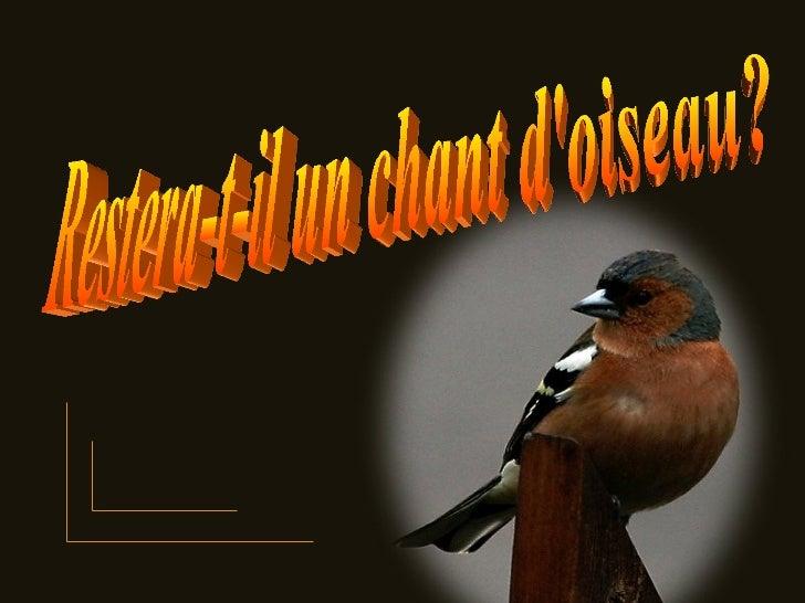 Restera-t-il un chant d'oiseau?