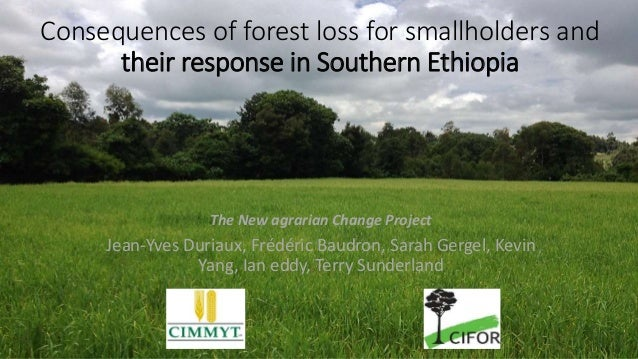 Consequences of forest loss for smallholders and their response in Southern Ethiopia The New agrarian Change Project Jean-...