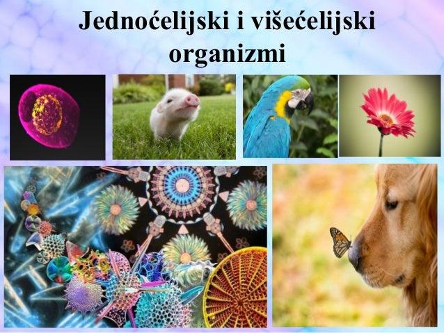 Jednoćelijski i višećelijski organizmi