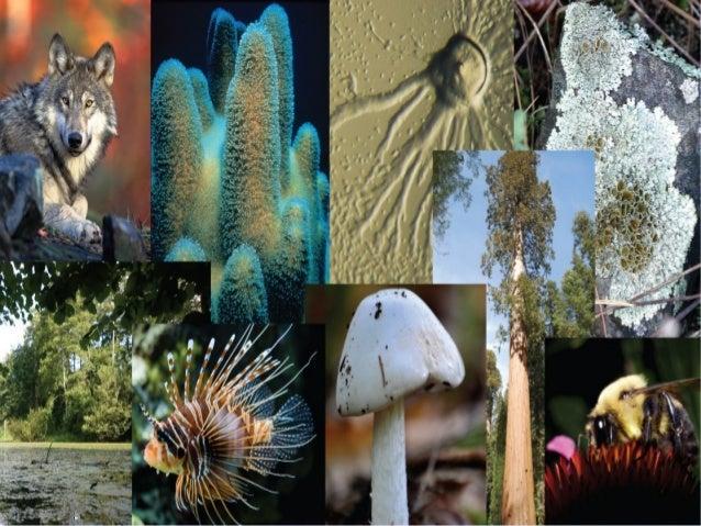Jednoćelijski i višećelijski organizmi Slide 2