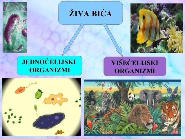 Jednoćelijski i višećelijski organizmi Slide 3
