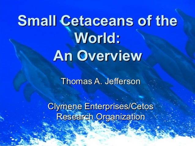 Small Cetaceans of theSmall Cetaceans of the World:World: An OverviewAn Overview Thomas A. JeffersonThomas A. Jefferson Cl...