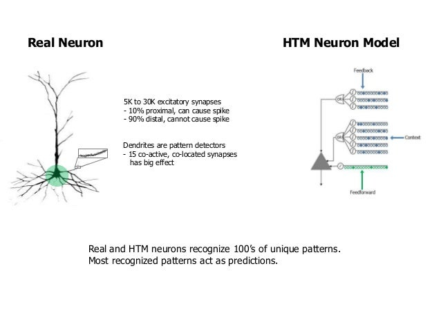 Numenta brain theory discoveries of 20162017 by jeff hawkins real neuron htm neuron model 7 ccuart Gallery