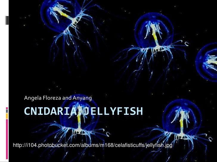Cnidaria:Jellyfish<br />Angela Floreza and Anyang<br />http://i104.photobucket.com/albums/m168/celafisticuffs/jellyfish.jp...