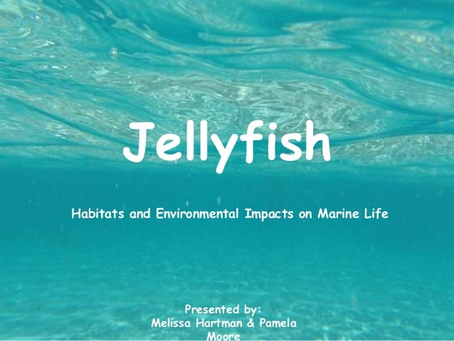 Jellyfish Habitats and Environmental Impacts on Marine Life Presented by: Melissa Hartman & Pamela Moore