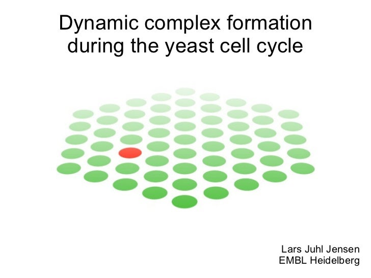 Lars Juhl Jensen EMBL Heidelberg Dynamic complex formation during the yeast cell cycle