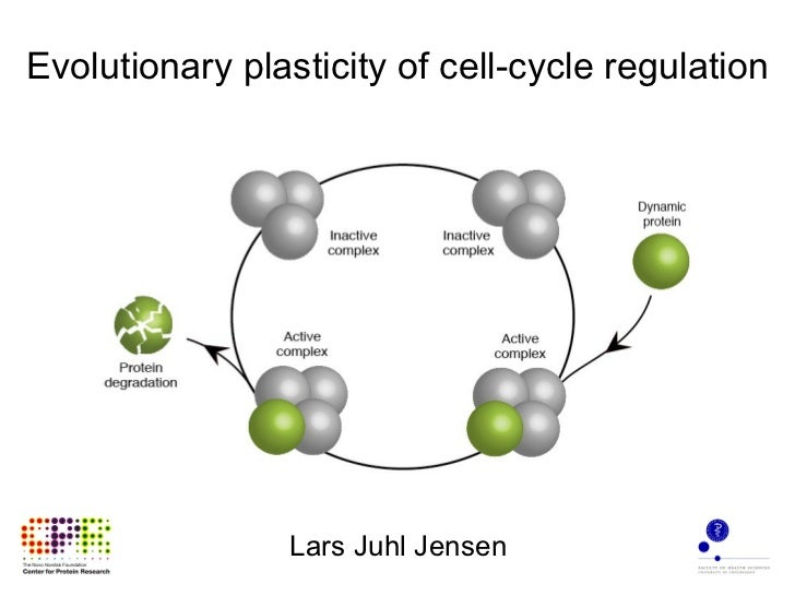 Evolutionary plasticity of cell-cycle regulation Lars Juhl Jensen