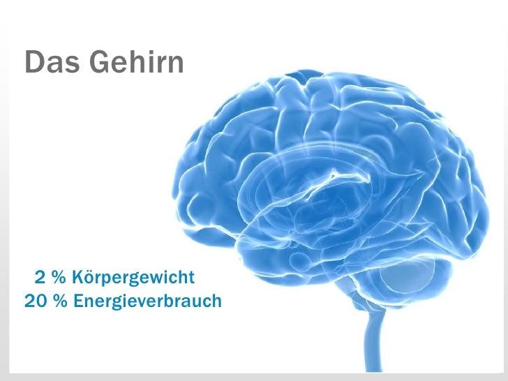 Das Gehirn 2 % Körpergewicht20 % Energieverbrauch