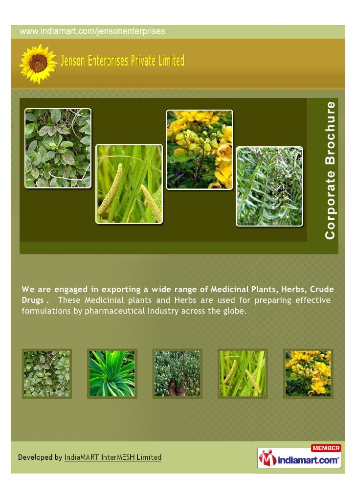 We are engaged in exporting a wide range of Medicinal Plants, Herbs, CrudeDrugs . These Medicinial plants and Herbs are us...